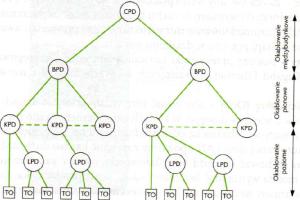 Schemat logicznego okablowania sieci